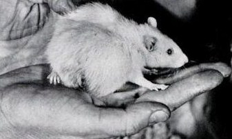 Рак: О мышах и людях