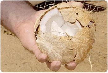 Пальмовый орех
