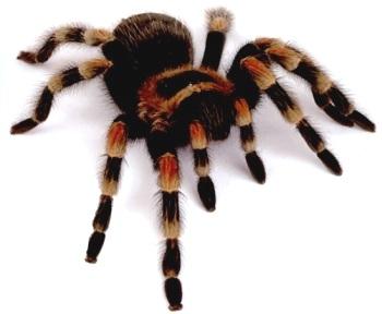 Из жизни пауков