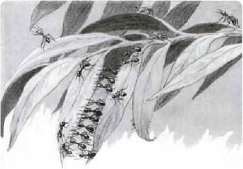 Могут ли насекомые мыслить?