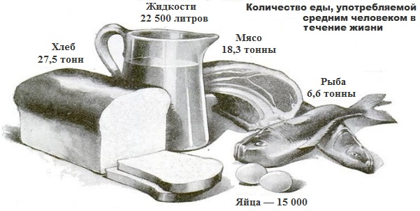 Количество еды, потребляемой в течение жизни