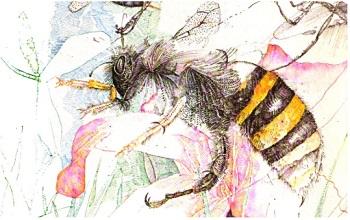 Укусы насекомых — Первая помощь и лечение